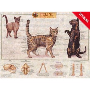 Feline ( Cat ) Skeleton Anatomy Chart