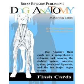 Canine Flash Cards